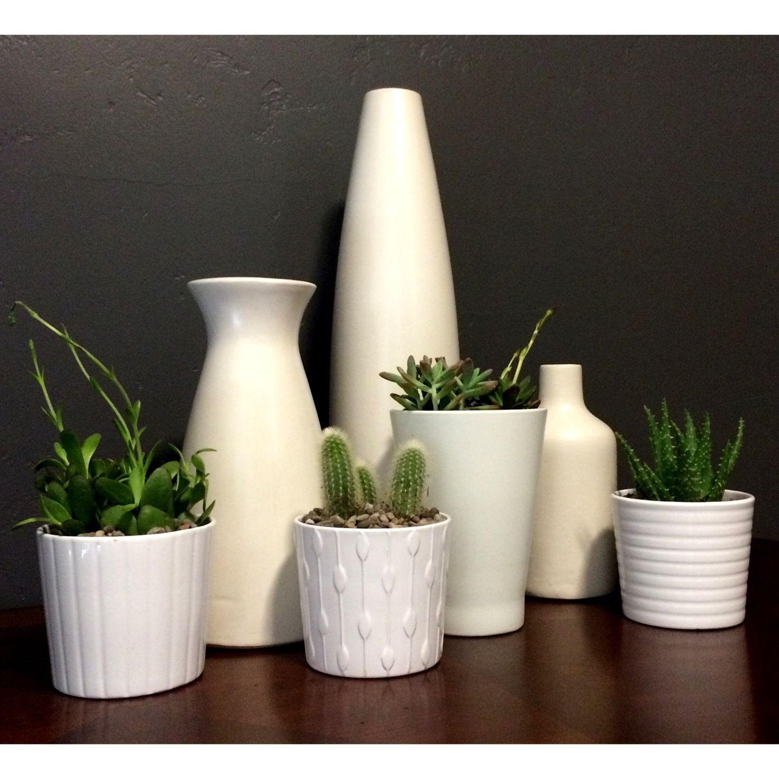 My love for white and succulents i found the larger white vases my love for white and succulents i found the larger white vases from west elm reviewsmspy