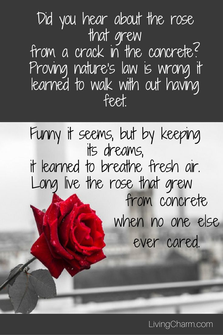 The Rose That Grew From Concrete quote by Tupac Shakur is both beautiful and inspiring Discover one of the most famous lines from this poetic rapper