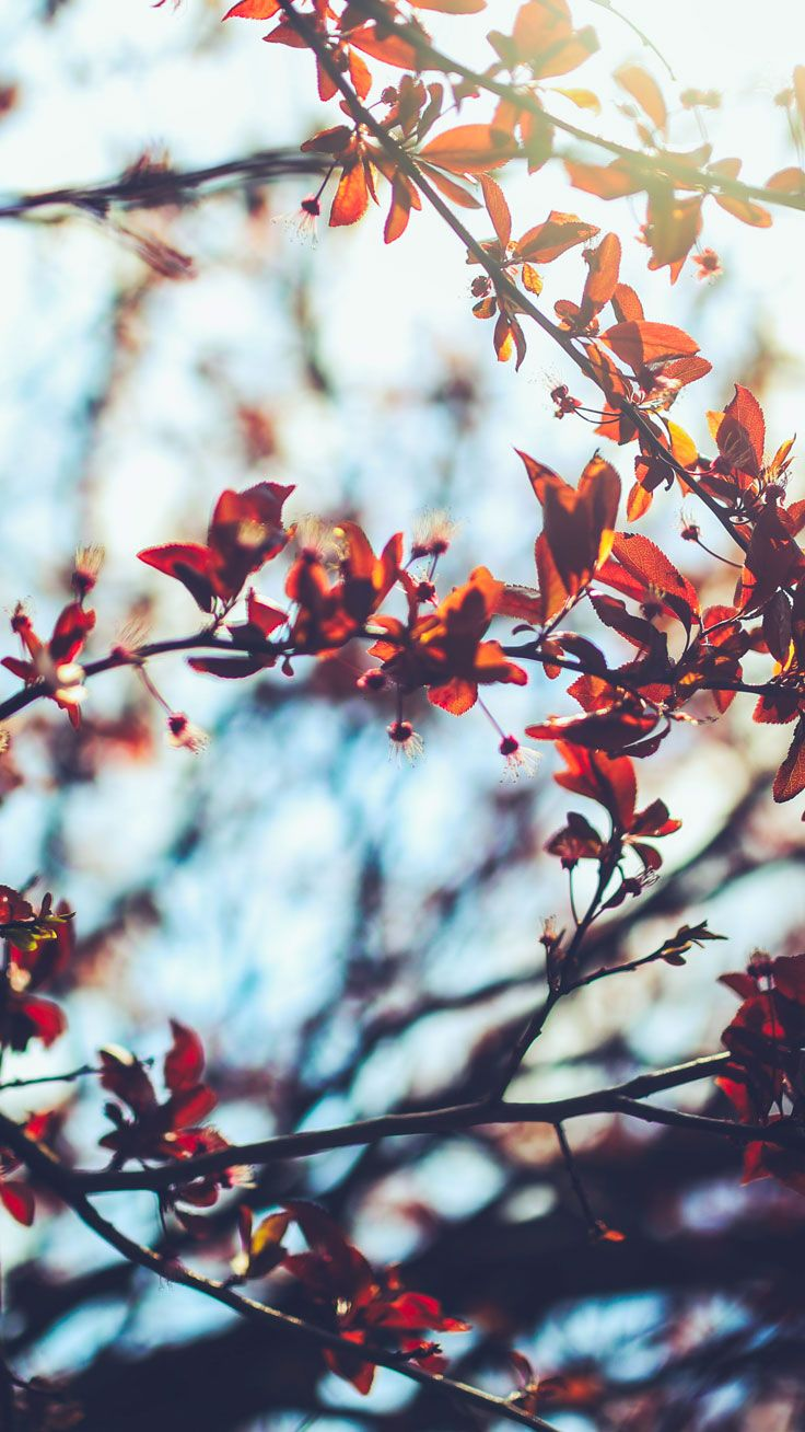 Pin by Chui Ling Lo on Iphone wallpapers Fall wallpaper