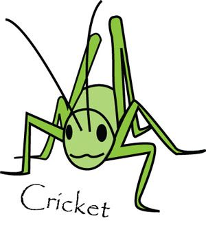 cricket cartoon insects world pinterest cricket rh pinterest ca cartoon cricket scoreboard cartoon cricket images