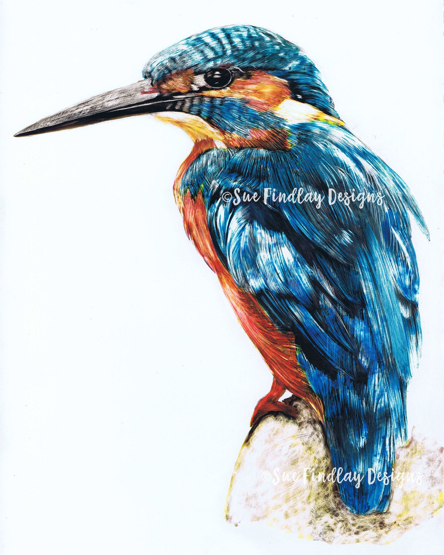 Kingfisher Original Watercolour And Ink On Clay Board Con