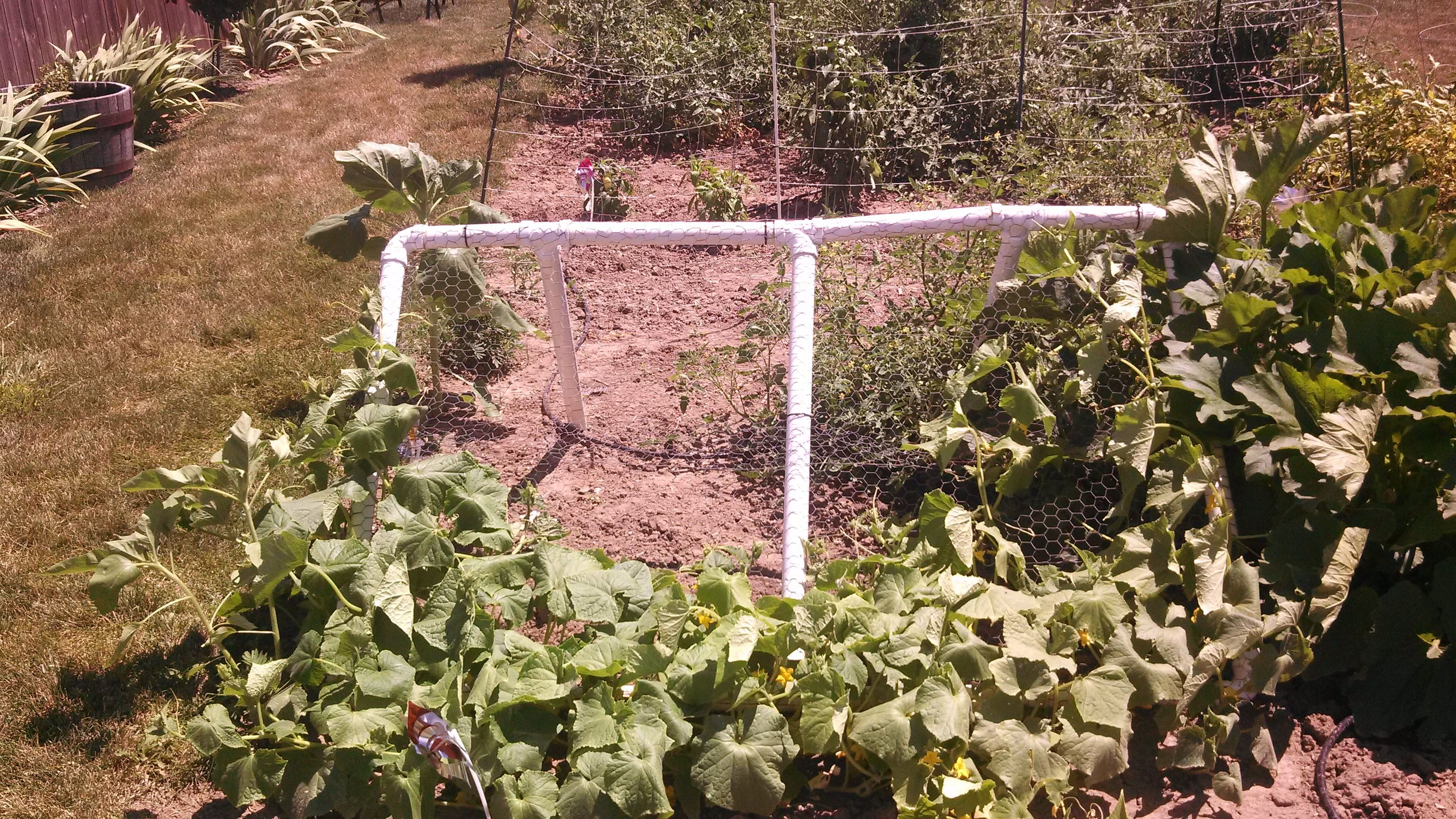 Cucumber Trellis Made From Pvc Pipe