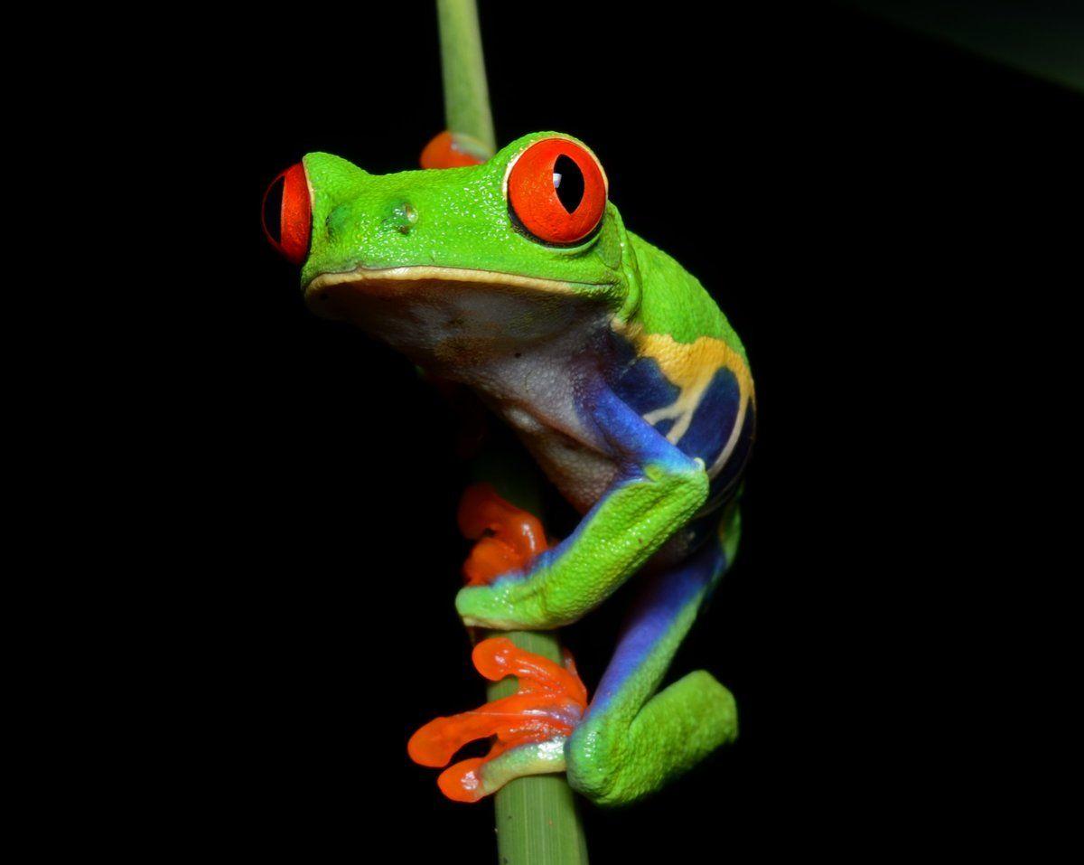 Earth おしゃれまとめの人気アイデア Pinterest Patricia Waye アマガエル アカメアマガエル 可愛すぎる動物