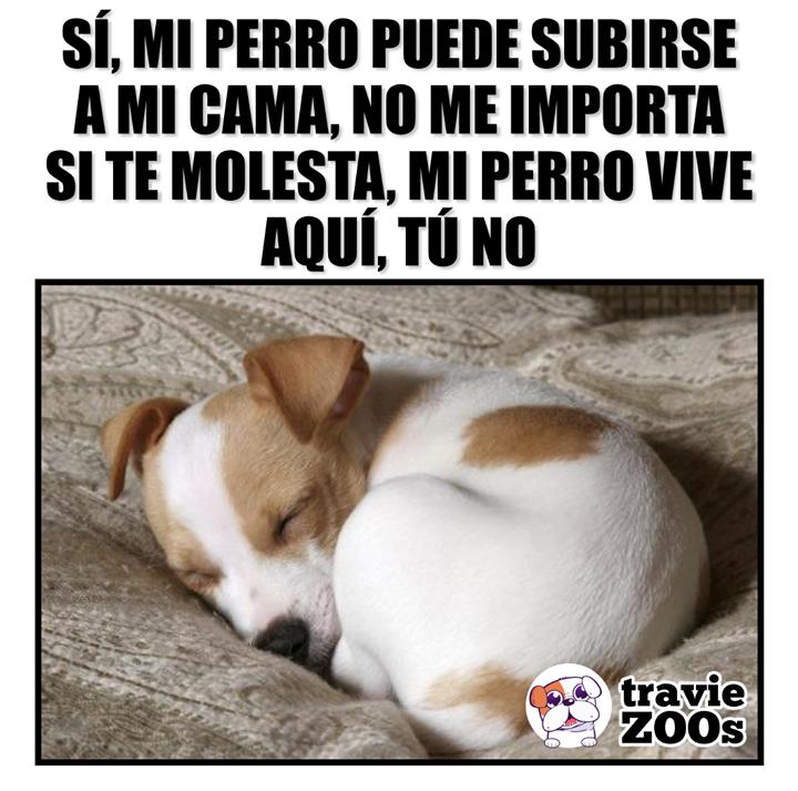 Www Quebusca Com Videos Divertidos De Perros Perros Durmiendo Imagenes De Perros Graciosos