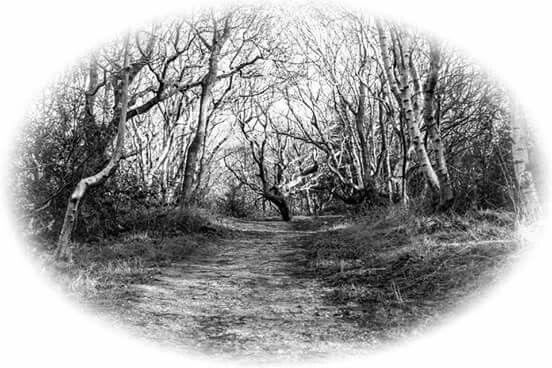 Vintage trees