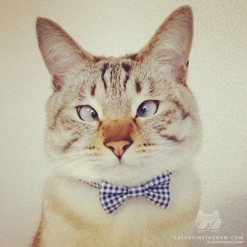 Cats Of Instagram Daily Doses Of Original Cute Cat Photos Cross Eyed Cat Cats Future Cat Lady
