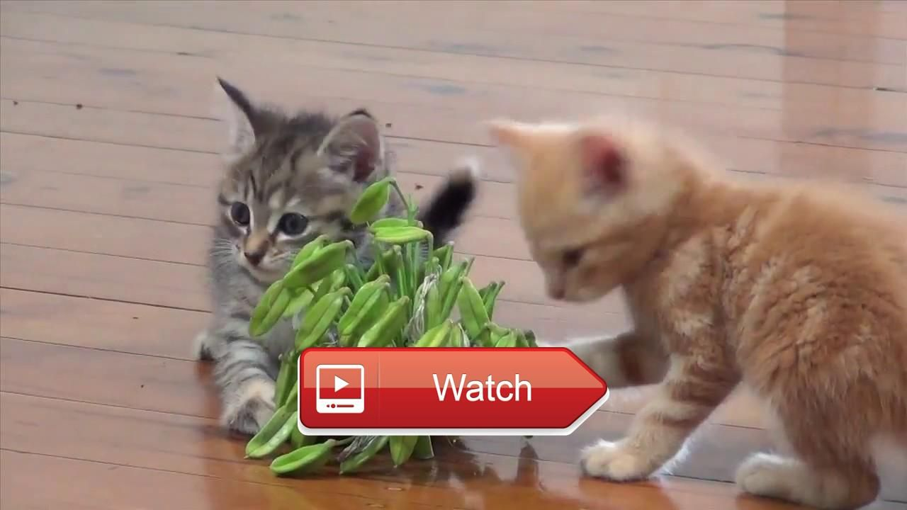 Baby Kittens Toys Weird Flowers Funny Cat Videos