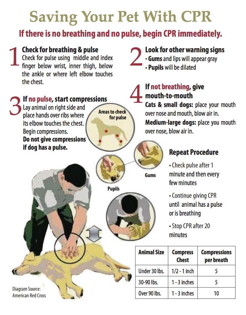 With pets increasingly being treated like a member of the family another version of the american red cross dog cpr info graphic xflitez Image collections