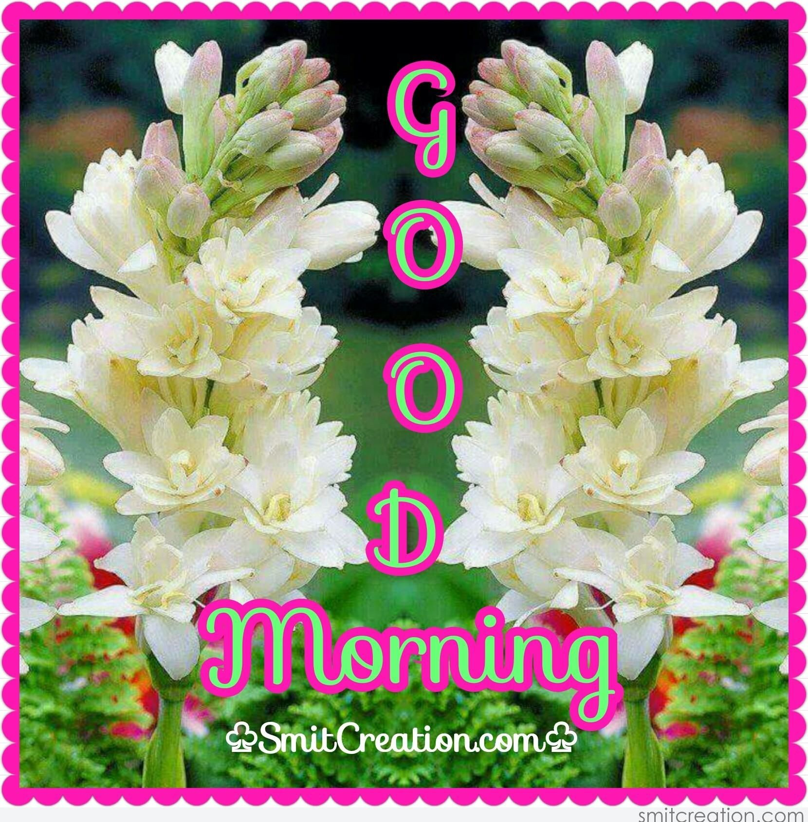 Good Morning Flowers Pictures And Graphics Smitcreationcom Page