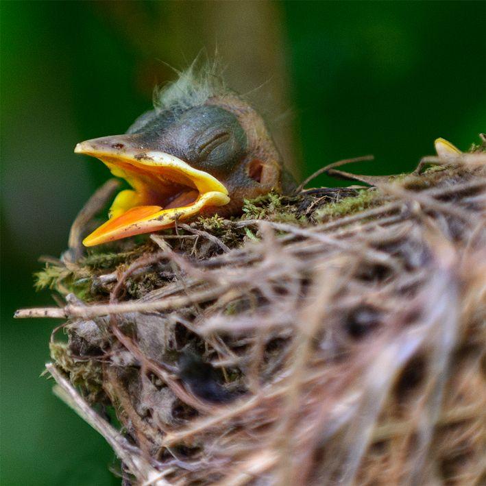Kleine Amsel Von Igor Barinov Birds Beautiful Birds Birds