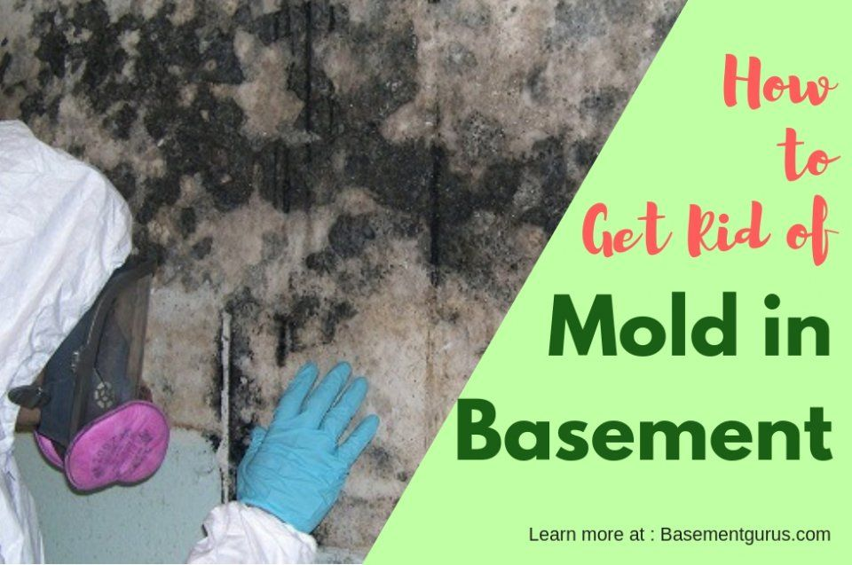 How to Remove and Get Rid of Black Mold in Your Basement