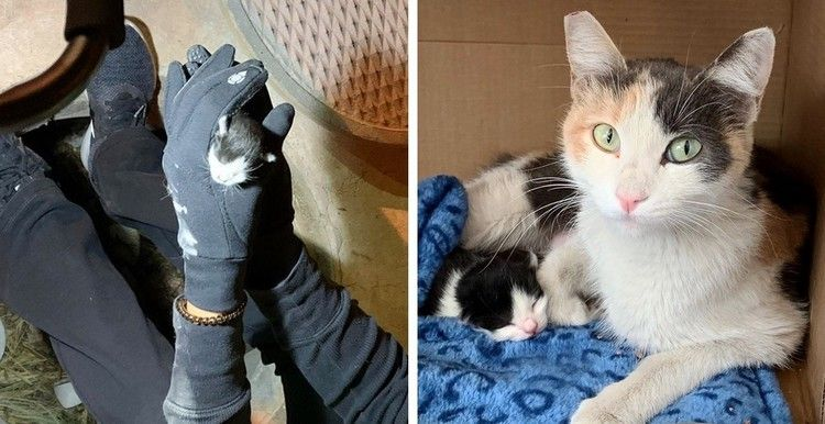 Kitten's Loud Cries Help Rescuers Find Her, They Locate