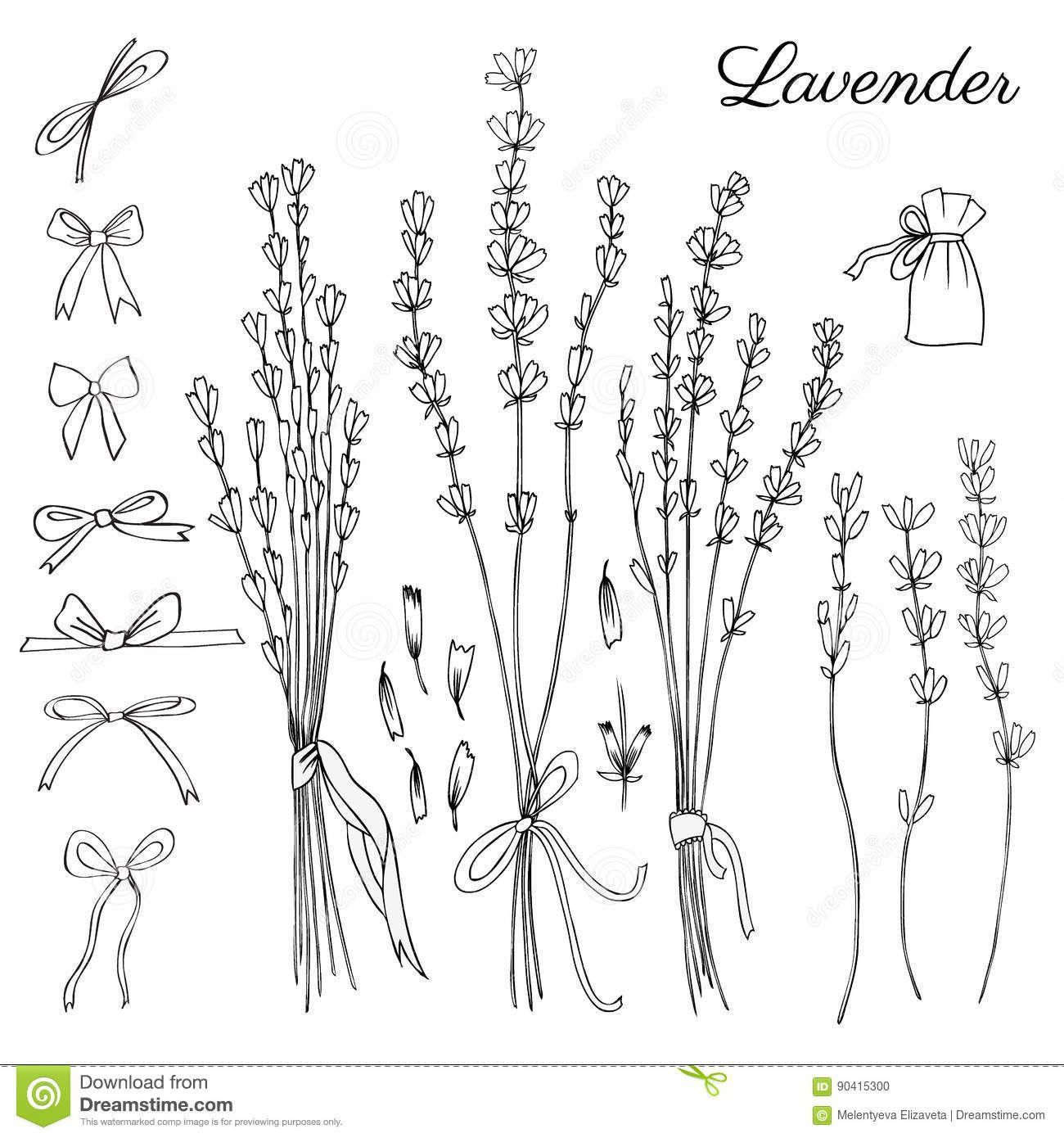 Bullet Journal Drawing Idea Lavender Drawing Lavender Bunch