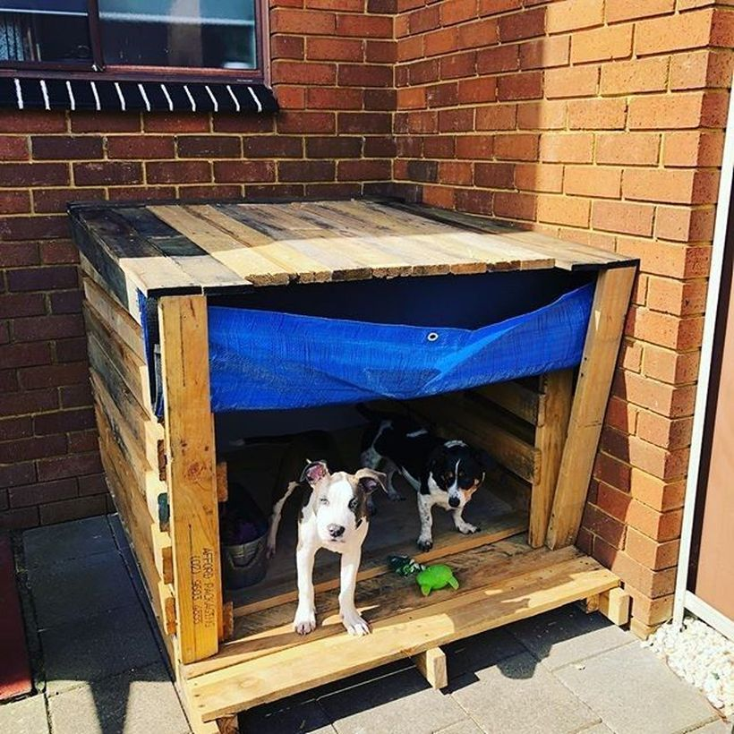 Home Design Ideas For Dogs: 30 Interesting Dog House Design Ideas (With Images