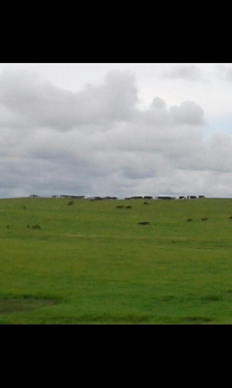 """""""Wild Horses"""" On the way to The Drummond Ranch/Lodge"""