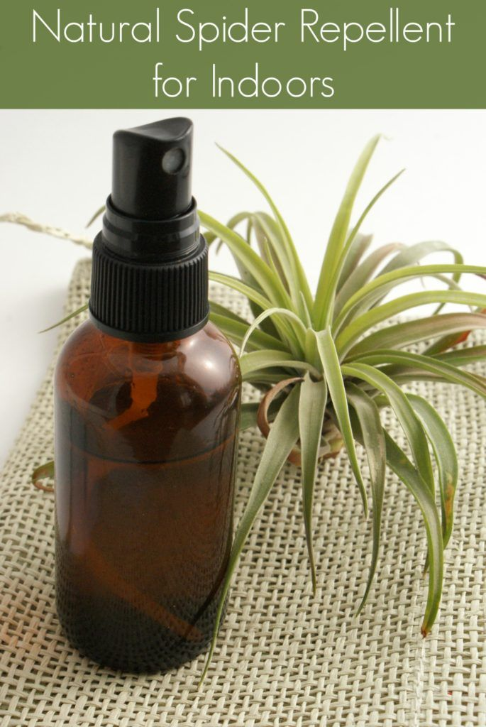Homemade Natural Spider Repellent For Indoors Diy Recipe