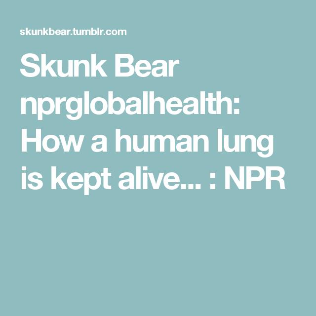 Skunk Bear nprglobalhealth: How a human lung is kept alive... : NPR