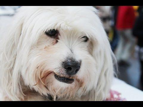 Hund Versucht Knochen Im Kissen Zu Verbuddeln Hunde Lustige Hunde Hundeliebe