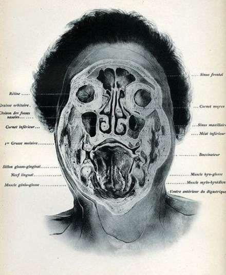 Medical art artworks human body 32 Ideas #bodyart #medical