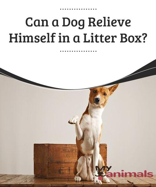Can A Dog Relieve Himself In A Litter Box