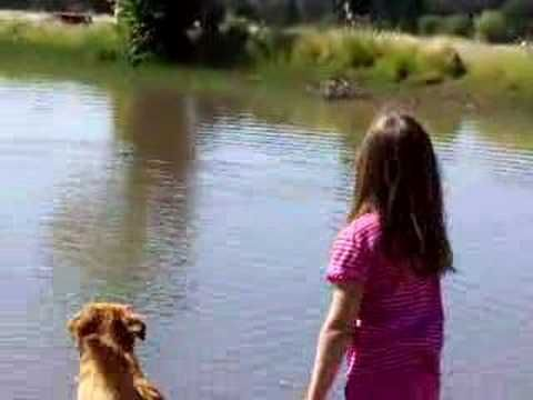 golden retriever fetches weiner dog
