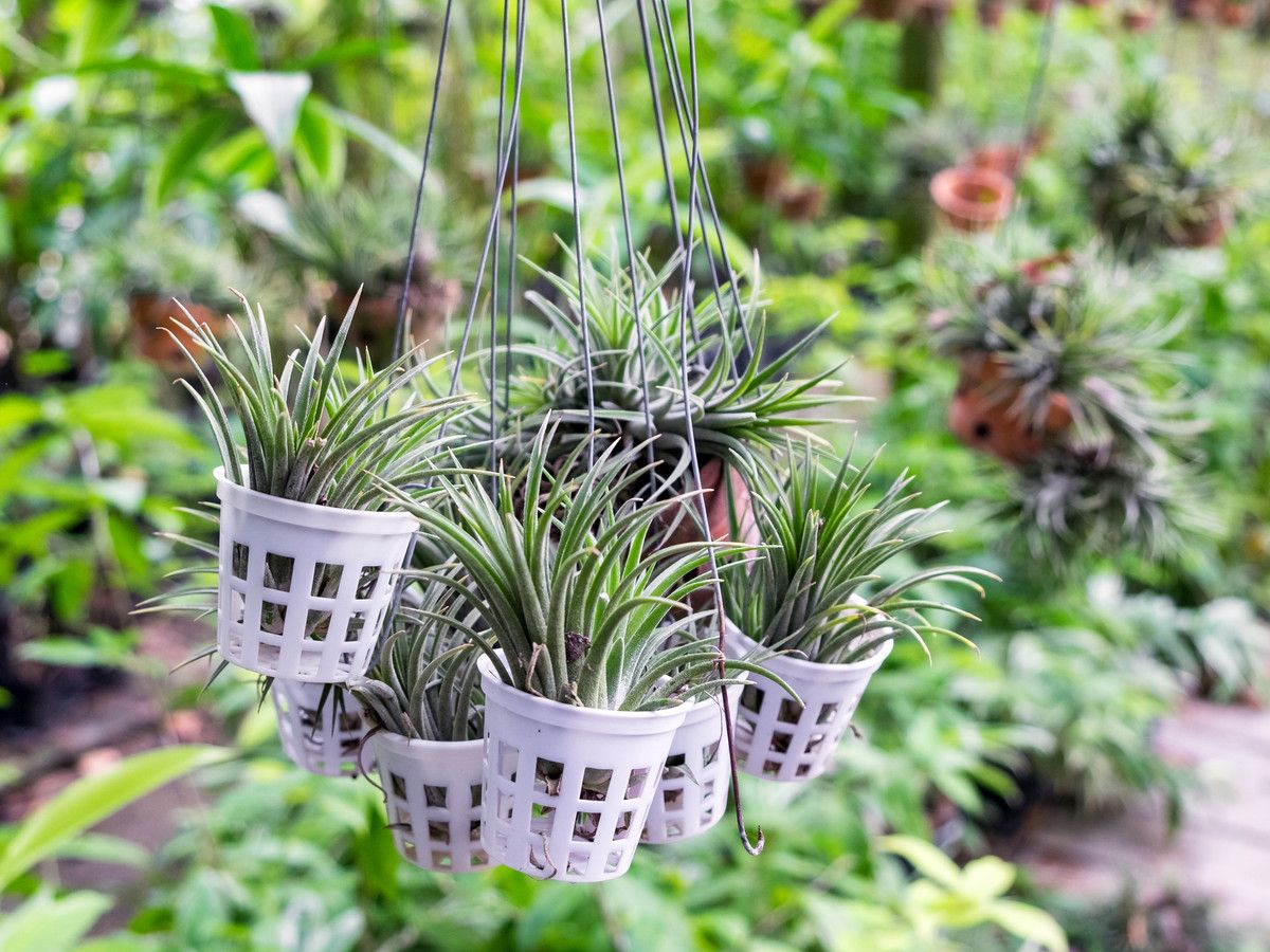 How Often To Water Succulents To Avoid Over or