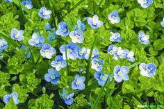 Diese 7 gesunden Wildkräuter für Frühlingssalat wachsen fast überall