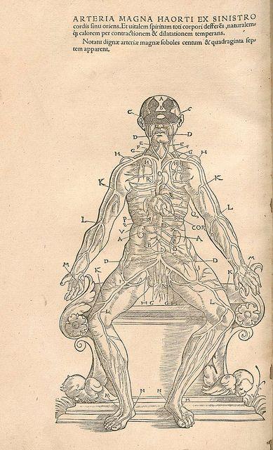 Arteria Magna Harorti ex Sinistro by peacay, via Flickr