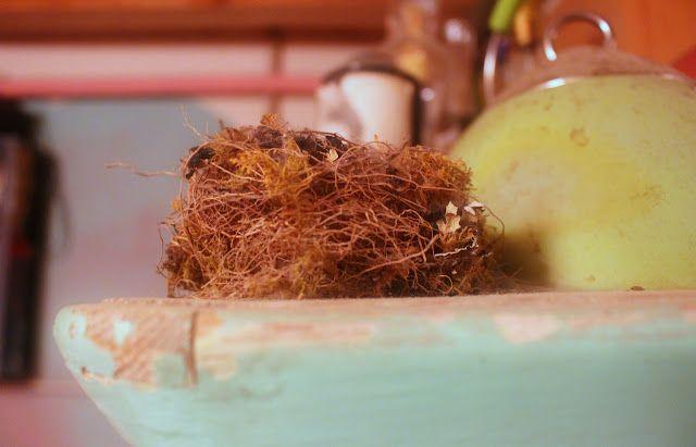 Alterazioni Viniliche nest