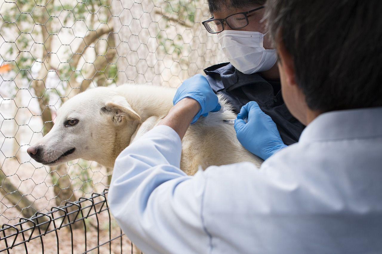 Qa Image01 動物保護 動物愛護 ジャパン