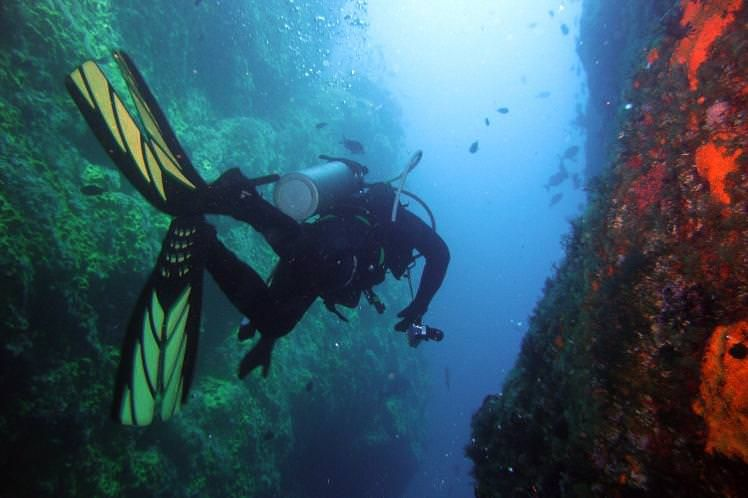 Submerge yourself in a marine wonderland on a dive in New Zealand's Poor Knights Reserve. Image by Anna Barnett / CC BY 2.0