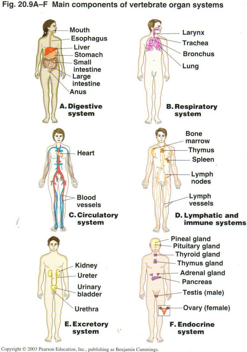Anatomy map of human body