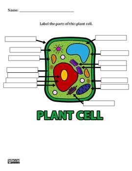 Plant Cell Worksheet - Brand New   Plant cells worksheet ...