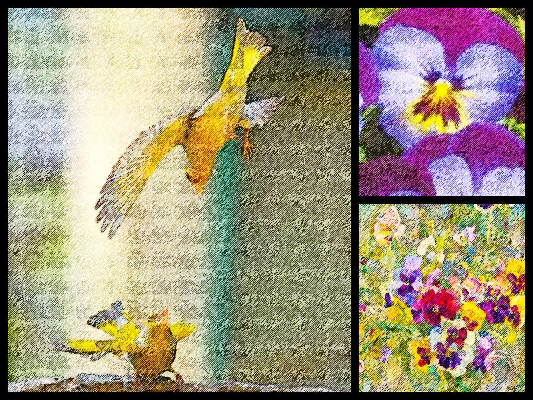 Spring 2015 Violets * ©LaSignoraMarinelli * www.la-signora-marinelli.de * Poster