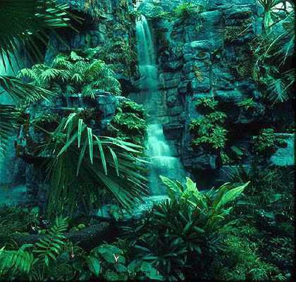 what is the location of the tropical rainforest biome
