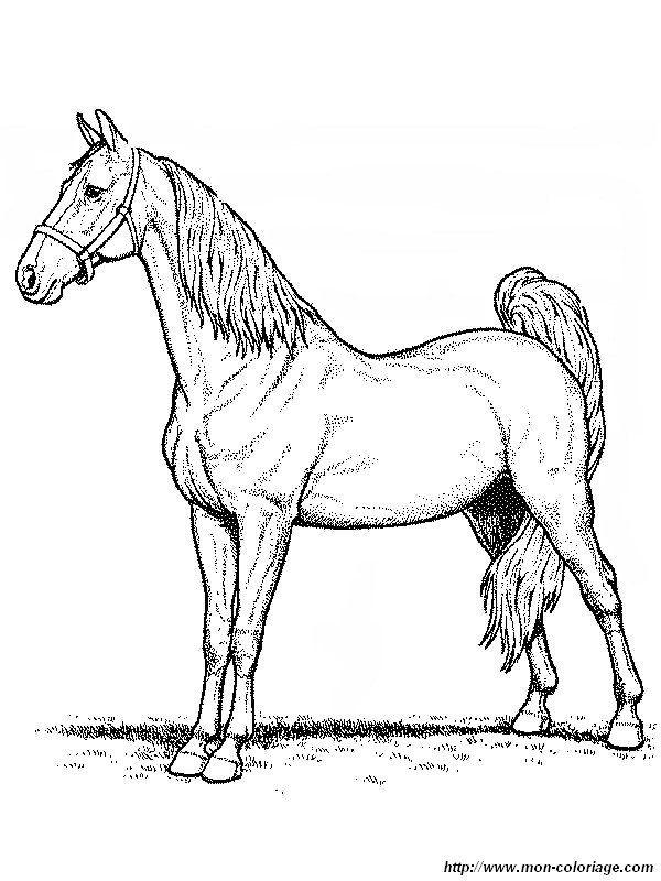 picture a majestic horse to color | inkleur vir Moeksie | Pinterest