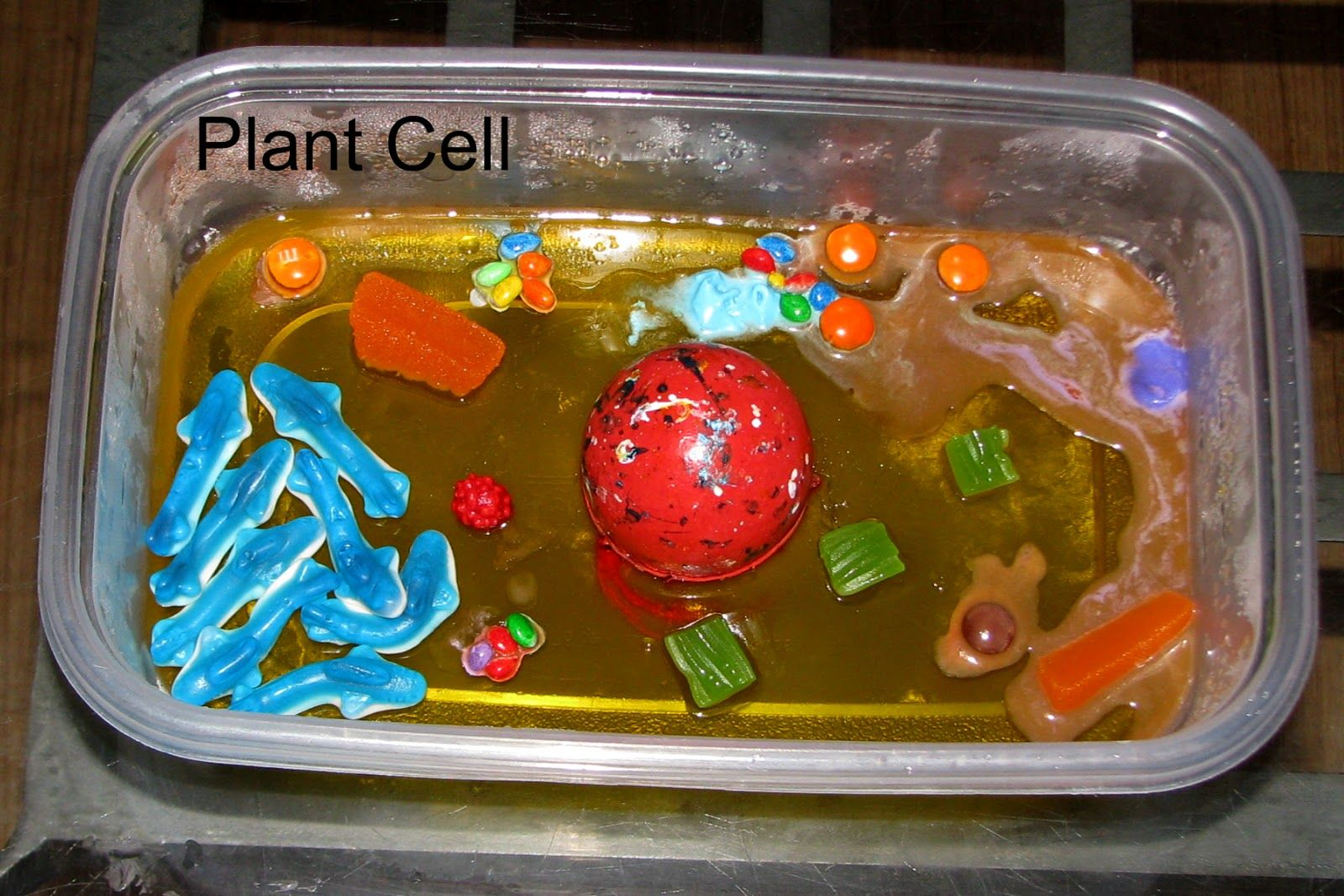 how to build a plant cell model
