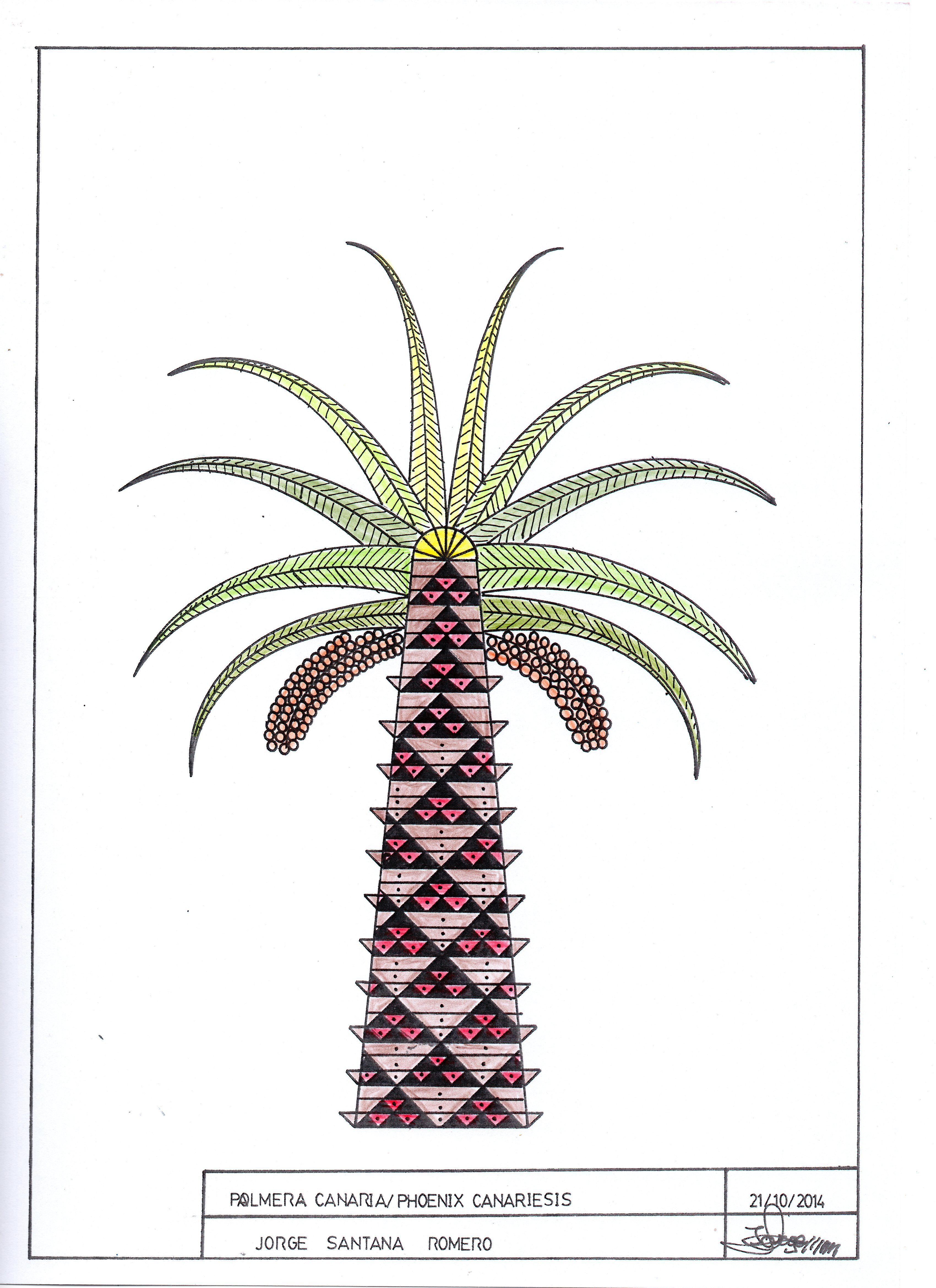Obra : La Palmera Canaria. | Dibujos Estilógrafos a Color ...