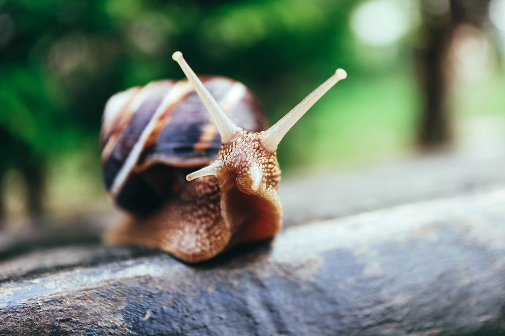hibernating snail on wall - Google Search | Organic ...