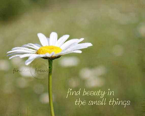 Image result for daisy quotes | Margrietiņa | Daisy quotes ...