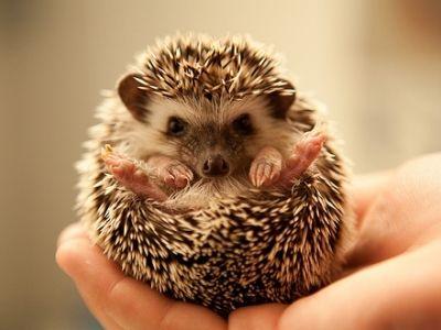7 Unique Pets You Can Own Adorable Unique Animals Cute Animals Cute Baby Animals