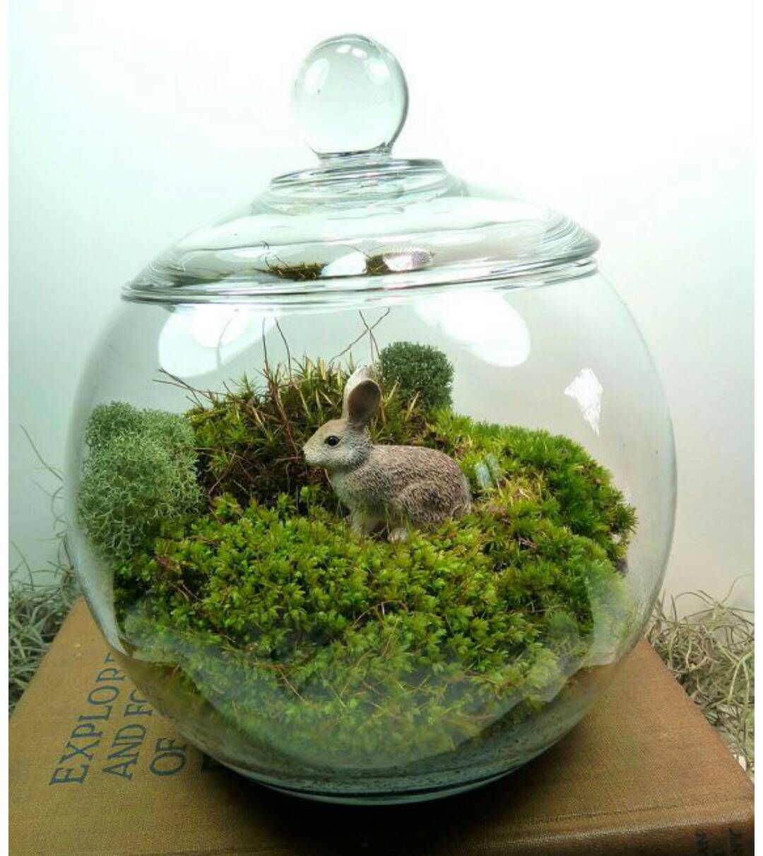 Bunny rabbit miniature garden moss terrarium for Peceras para jardin