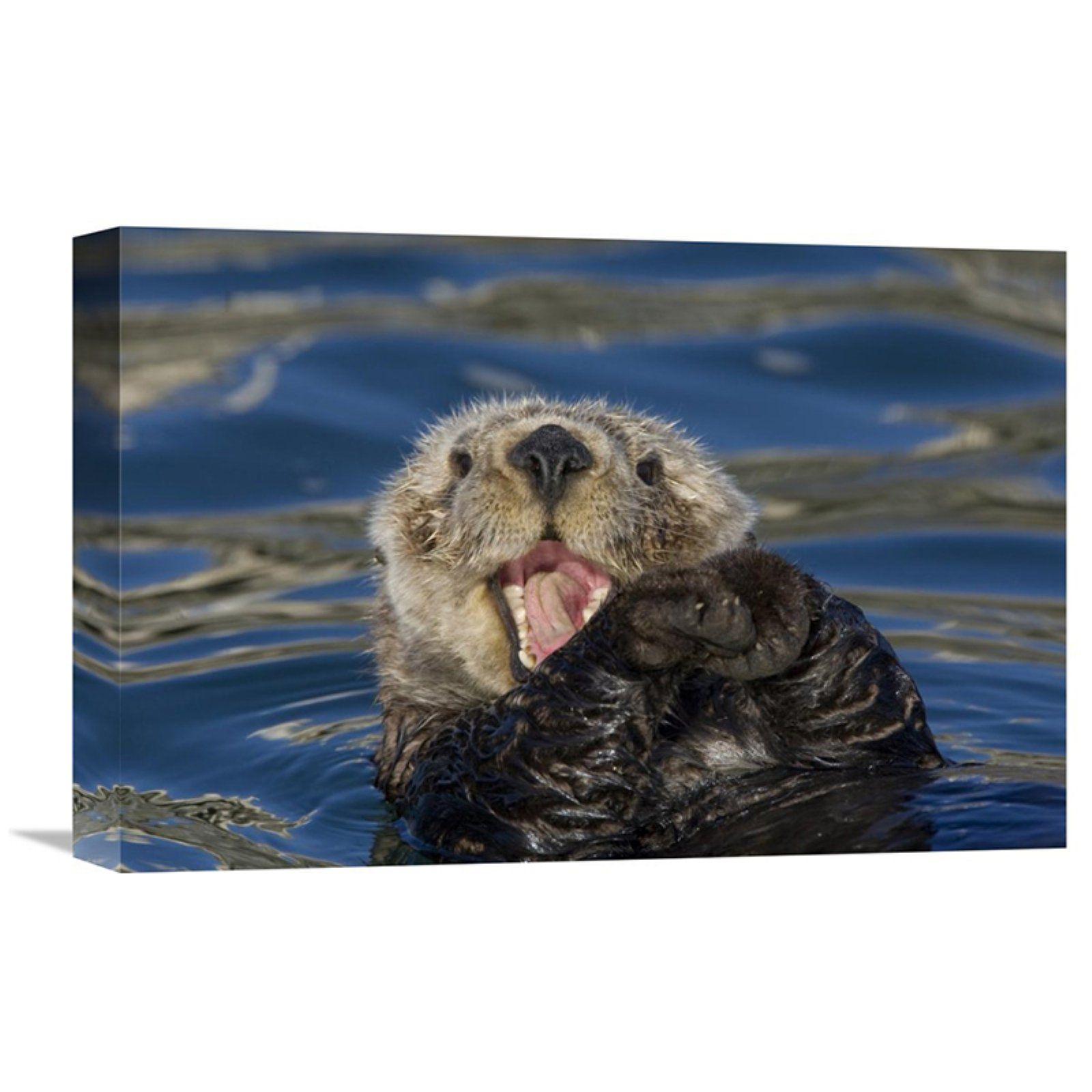 Global Gallery Sea Otter Yawning Monterey Bay California Wall Art
