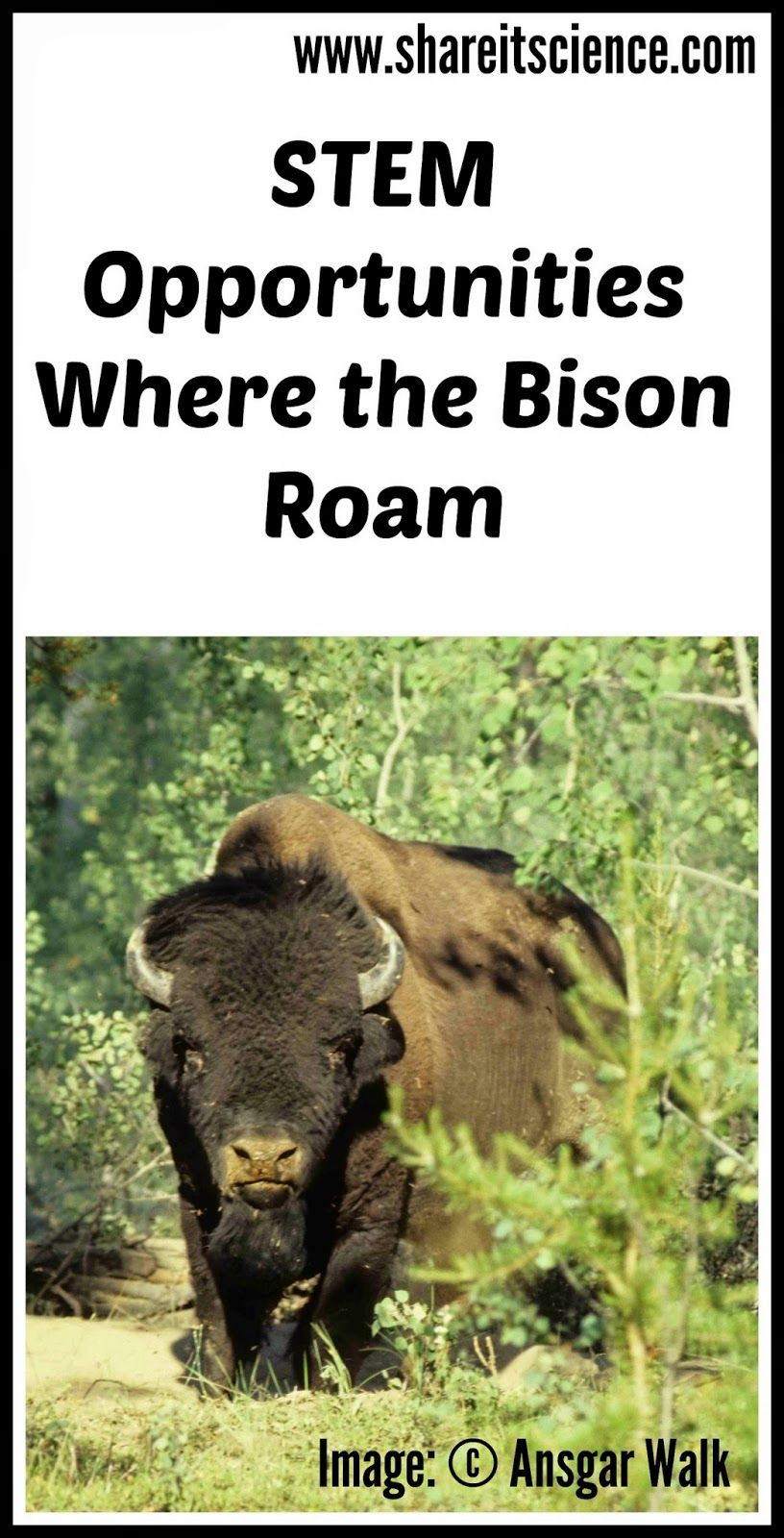 Stem Opportunities Where The Bison Roam Animal Science Respect Activities Stem Curriculum [ 1600 x 816 Pixel ]