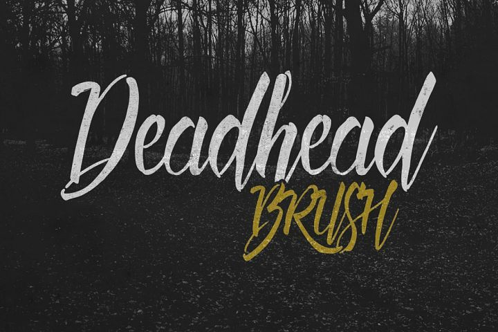 5 Awesome Brush Fonts Brush Font Lettering Typography Fonts