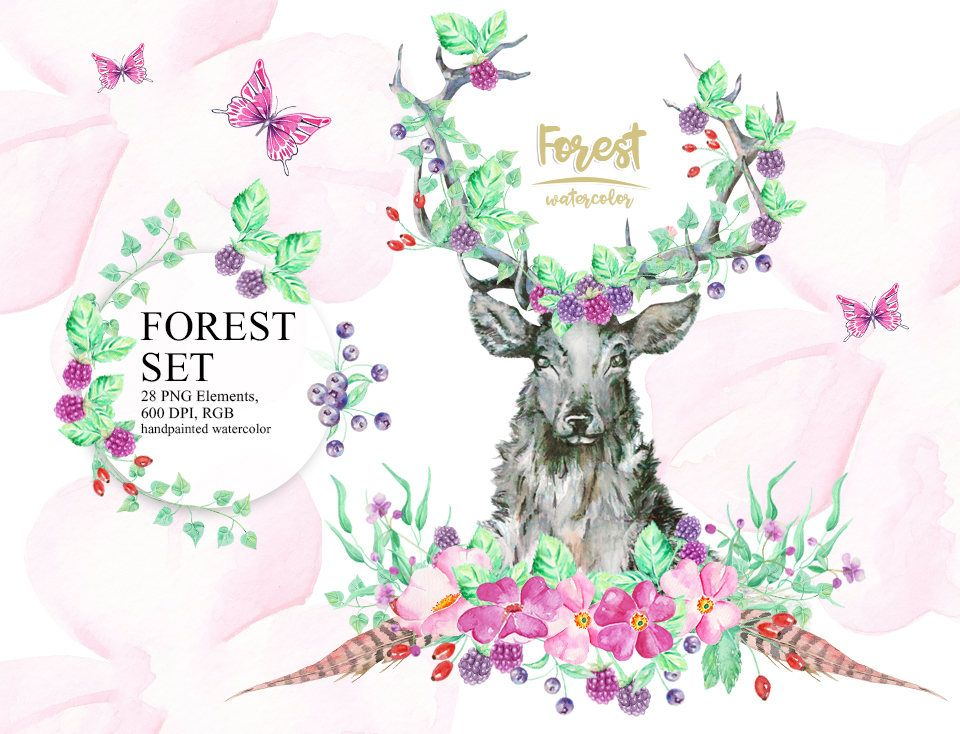 Watercolor Forest Clipart, Forest fruits, Deer, Wild Roses, Feather ...
