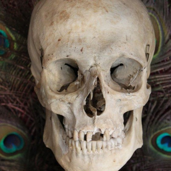 human skull, real human skeleton bones,human skulls - craft, Skeleton