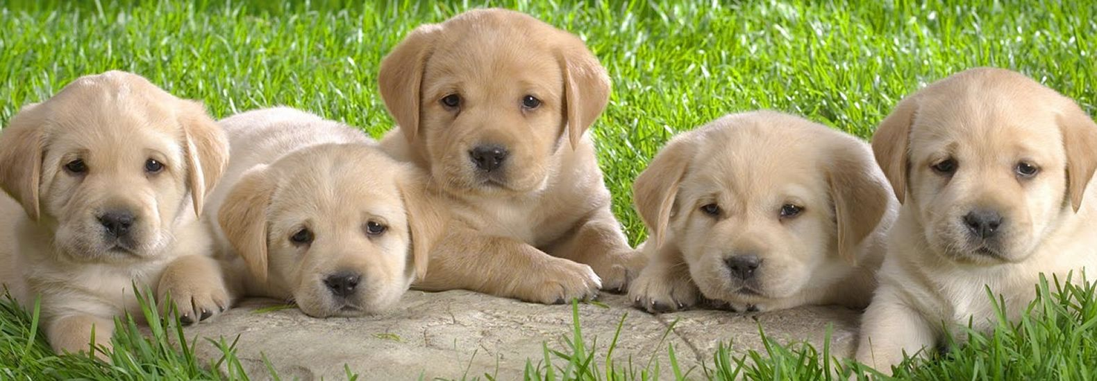 About Our Company Petland Columbus Pet Store Ohio Puppies
