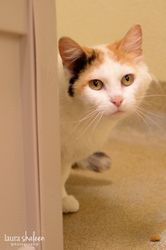 Adopt Ginger On Petfinder Cat Breeds Short Hair Cats Cats