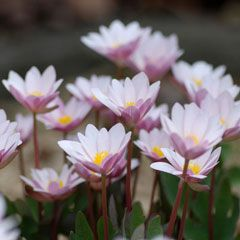 Shikoku Garden Rare Plant Nursery Ehime An